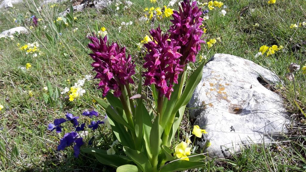 H Orchidee e viole d'Eugenio