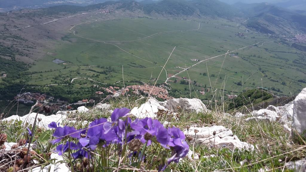 P Rocca di Cambio. L'abitato