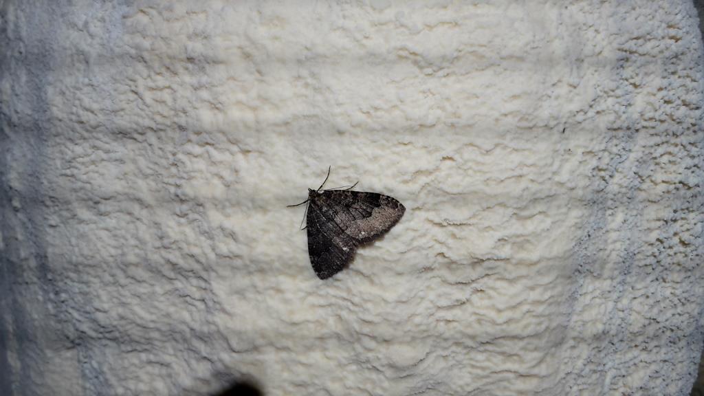 F La farfalla